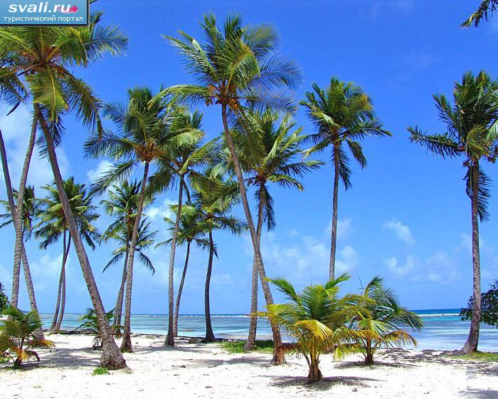 Пляж реюньон франция