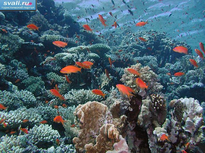 Подводный мир шарм эль шейх египет