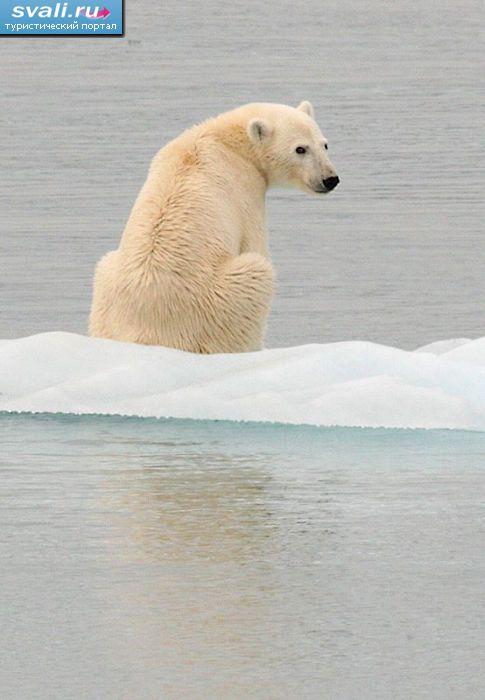 Медведь провинция нунавут канада