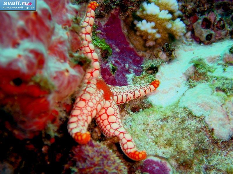 Подводный мир сейшельские острова